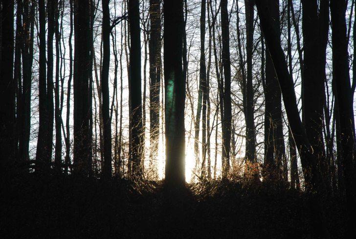 Im Dazwischen - im noch nicht Winter, aber auch nicht mehr Herbst - leuchten die wenigen Farben im Wald hervor. Still ist es und friedlich. Das emsige Summen und Sirren der warmen Monate ist verstummt. Es rascheln die Füße durch knietiefes Laub...